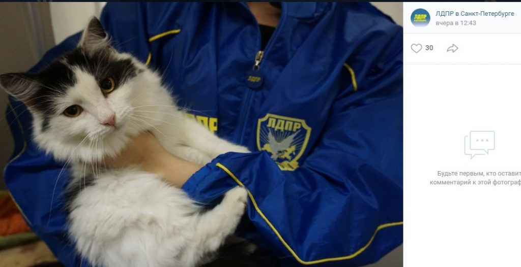 ЛДПР начала выдавать партийные билеты петербургским котам