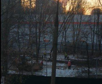 В Москве из-за Кутузовского дублера решили срубить 300-летний дуб