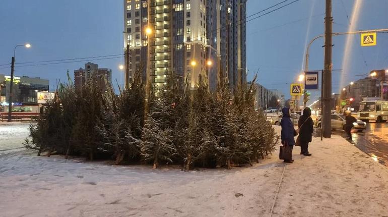В Петербурге пресечена деятельность незаконных елочных базаров