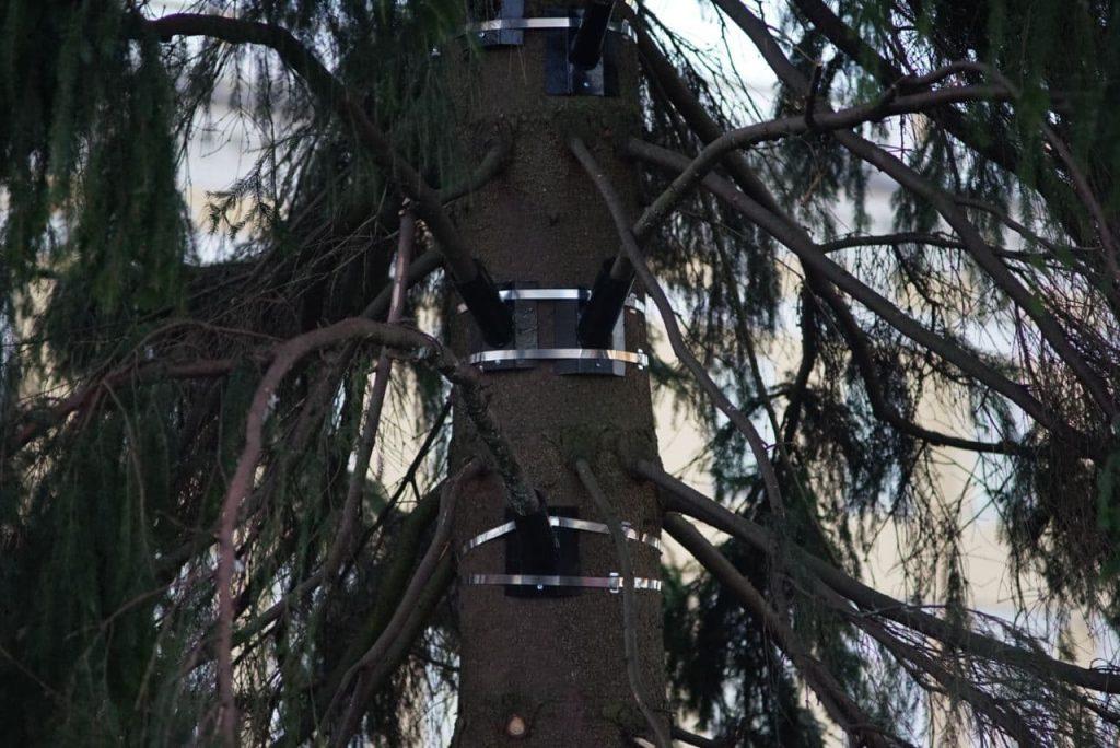 В Петербурге установят 62 новогодние ели