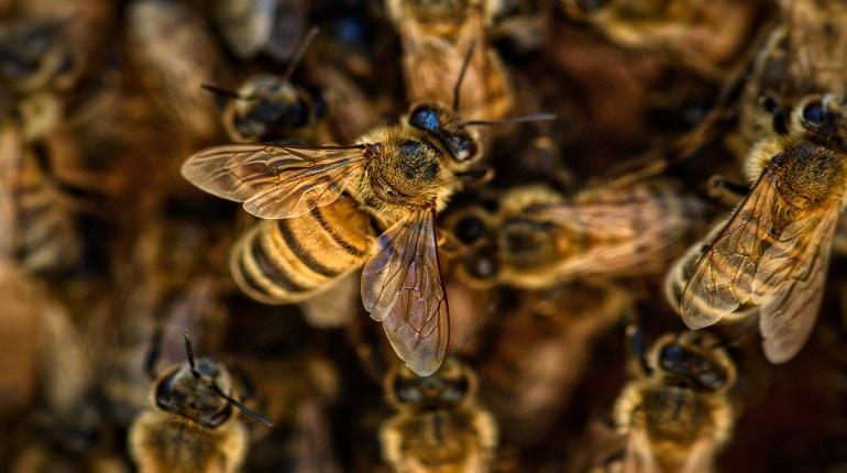 Ученые рассказали о массовом сокращении видов пчел