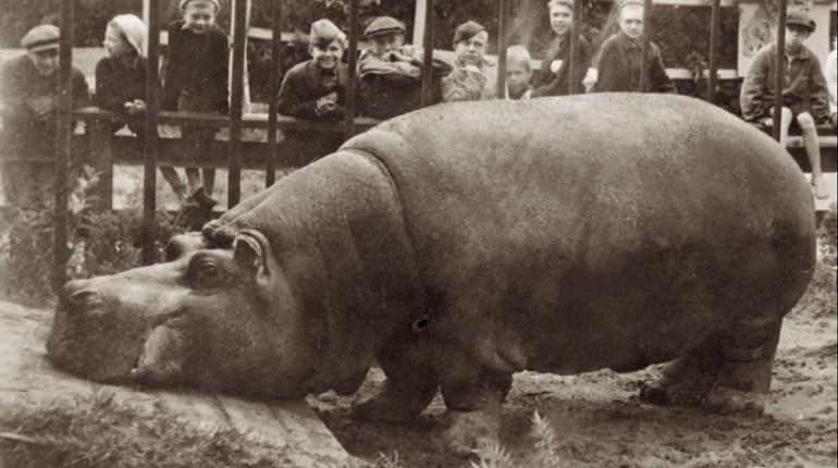 Ленинградский зоопарк рассказал о судьбе животных, спасенных в блокаду
