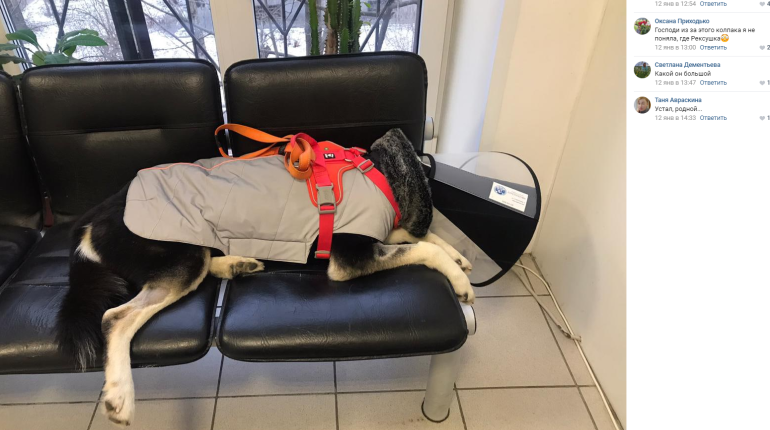 Петербуржец, избивший собаку молотком, получил полгода работ
