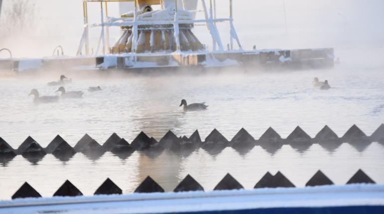Дикие утки гадят в очищенную петербургскую воду