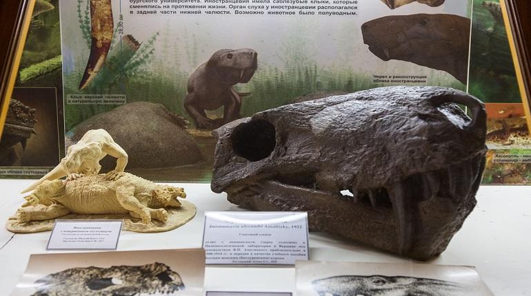 Ученые СПбГУ отреставрировали слепки черепов ящеров и сделали их 3D-модели