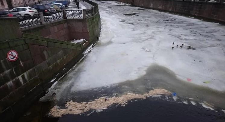 В Карповке обнаружили десятки не хрустящих багетов