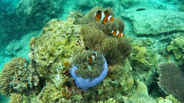 У берегов Австралии обнаружили три вида губок-убийц
