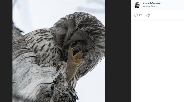 Петербургский фотограф заснял засыпающих после новогодней ночи сов