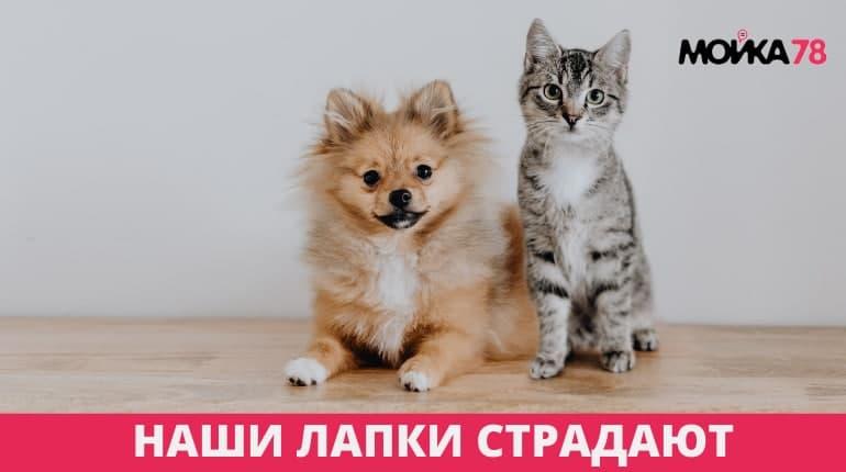 Соляной удар главы комблага Малинина пришелся по лапкам городских котиков и собак