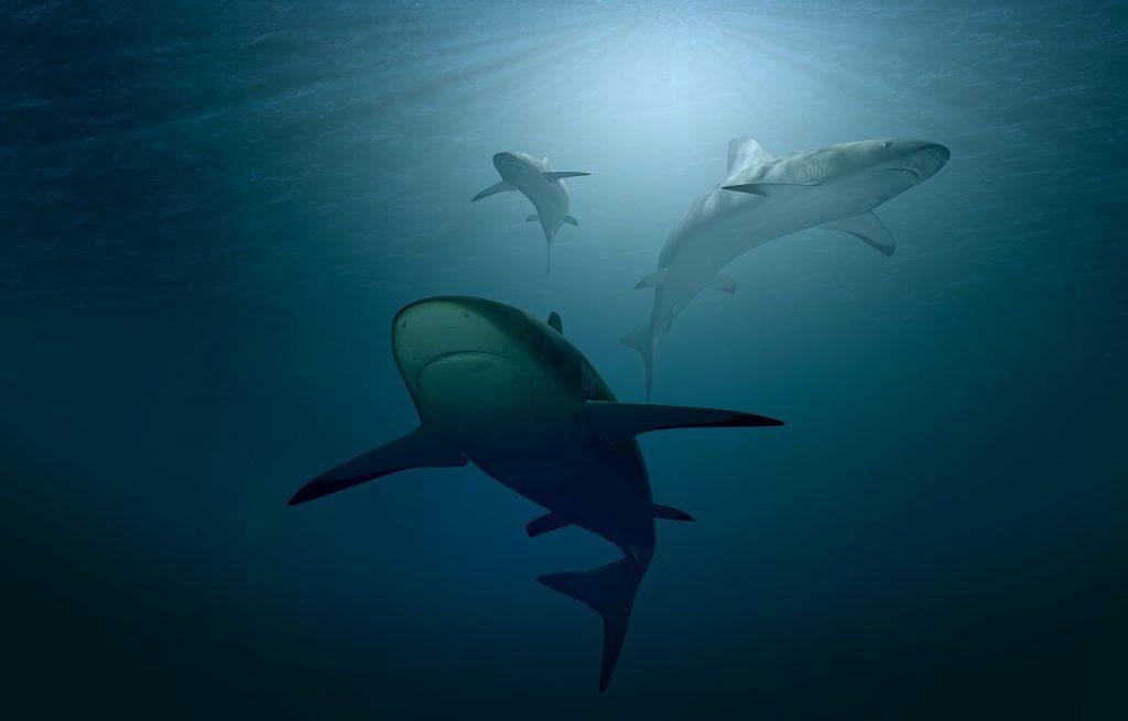 Ученые обнаружили ранее неизвестный вид древней «крылатой» акулы