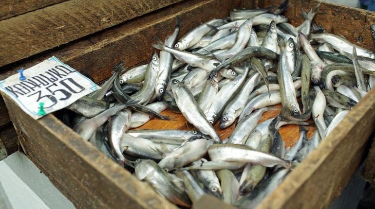 На старте сезона корюшки цены подскочили до 1,6 тысячи за килограмм
