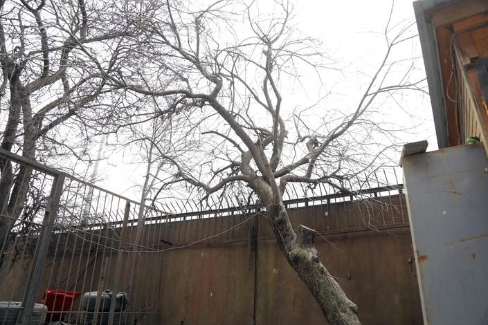 Подземный ход, старые яблони и новое арт-пространство на Арсенальной набережной в Петербурге