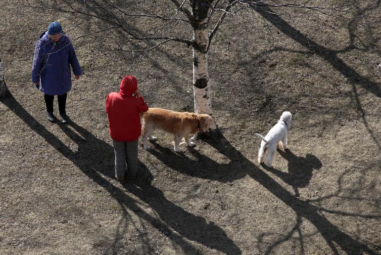 Жителя Красного Бора задержали после стрельбы по собаке из окна