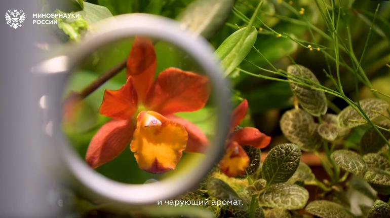 Петербургские ученые к 8 марта вывели новый сорт орхидеи