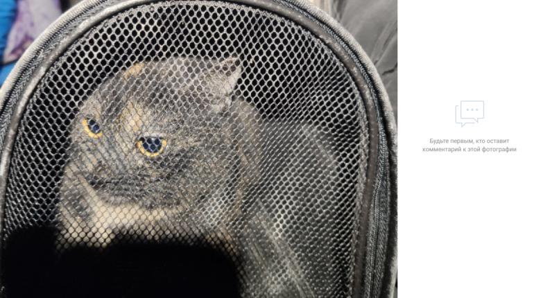 В Мурино ночью спасли котенка из вентиляционной шахты