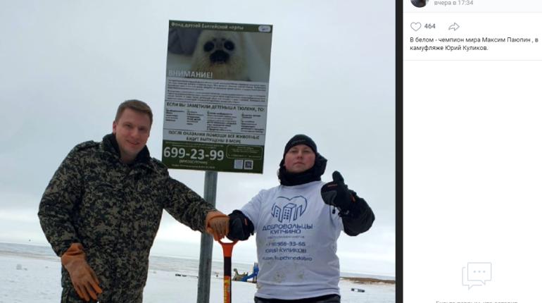 На берегу Финского залива поставили плакаты о спасении тюленей