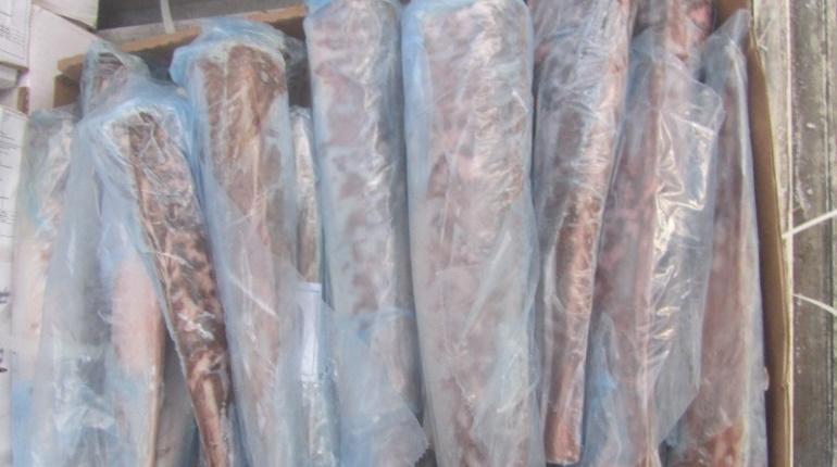 Петербуржцам придется жить без 26 тонн мороженного аргентинского хека