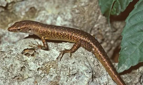 Правительство Австралия сообщило об исчезновении 13 видов местных животных