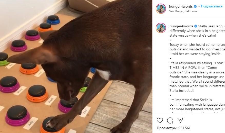 Логопед из Калифорнии научил свою собаку разговаривать