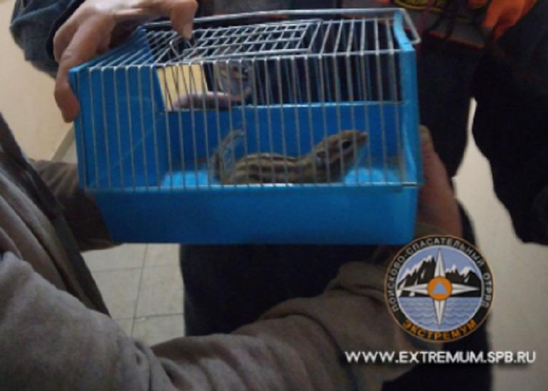 В центре Петербурга волонтеры передали хозяйке засевшего около трубы бурундука