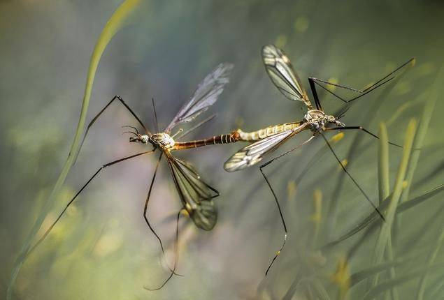 Ученые из ИТМО собрали новые геномы комаров, которые помогут в борьбе с малярией