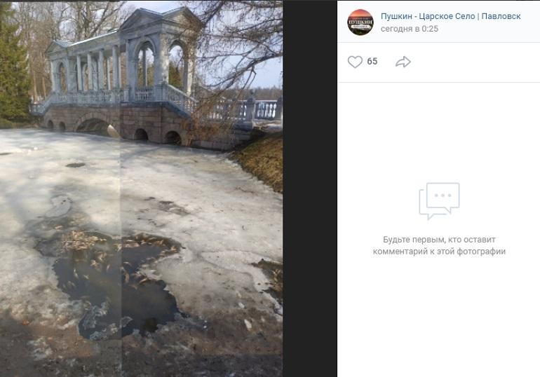 В социальных сетях появились сообщения о массовой гибели рыб в Екатерининском парке