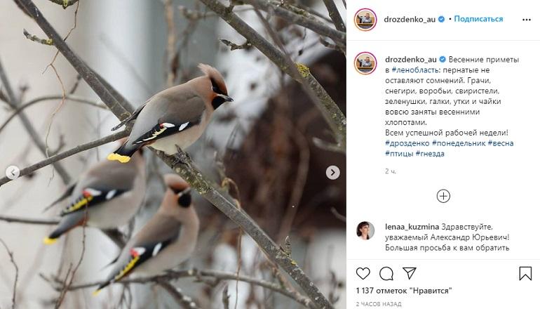 Фауна 47-го региона: Дрозденко рассказал о весенних приметах в Ленобласти