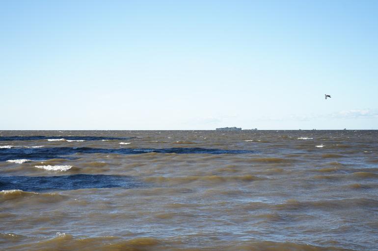 В Красненькой речке нашли заросший водорослями труп