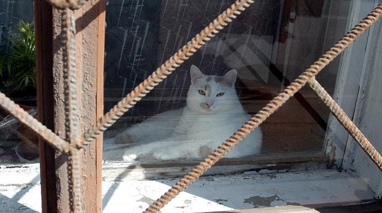 Приютам для бездомных животных предоставят субсидии из бюджета