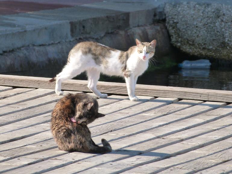 Выдачу котиков в МФЦ Ленобласти поставят на поток