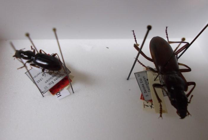 Мужчина попытался вывезти из Петербурга в Финляндию почти 2,5 тысячи заспиртованных жуков