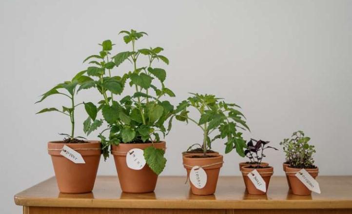 Ученые сделают возможным общение человека с растениями