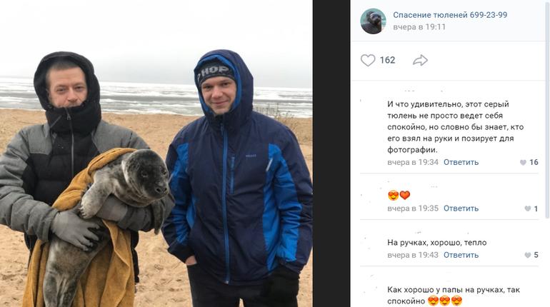 «Фонд друзей балтийской нерпы» спас тюленёнка из Кронштадта