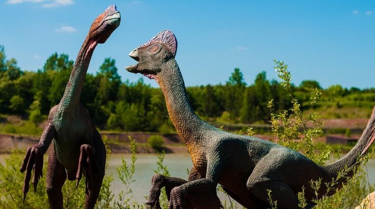 В Китае нашли след динозавра, который был размером с кошку