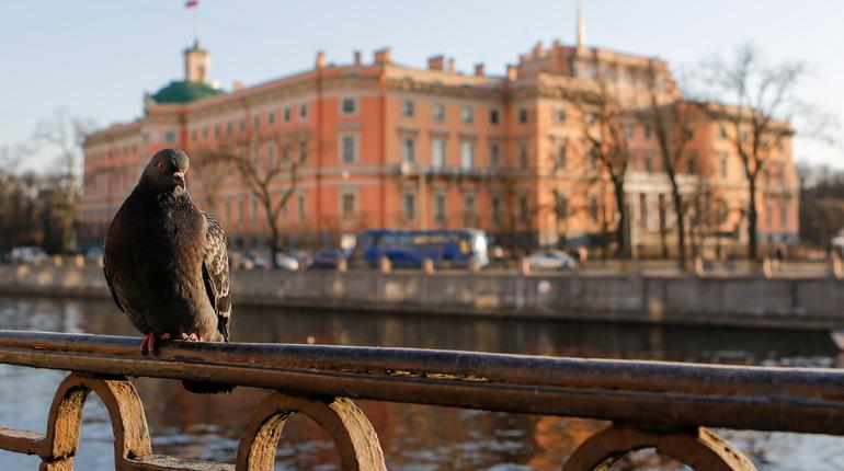 Погода от Леуса: в Петербурге в воскресенье солнечно