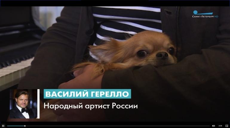 Василий Герелло рассказал, как относится к инициативе штрафовать владельцев шумных животных