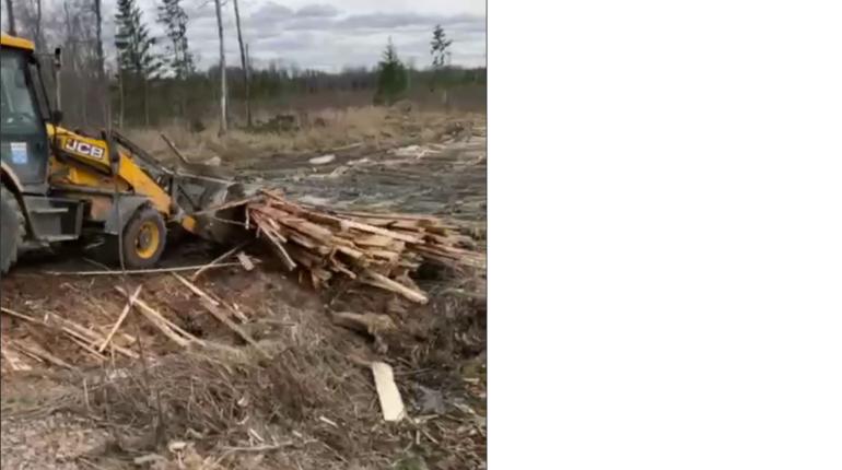 В Ленобласти дорожники возвращают деревья обратно в лес