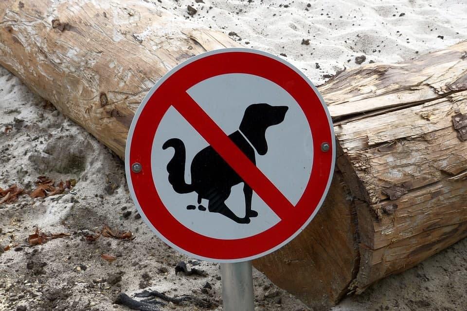 Спасти Центральный район от собачьих какашек смогут автоматы по приему их за деньги