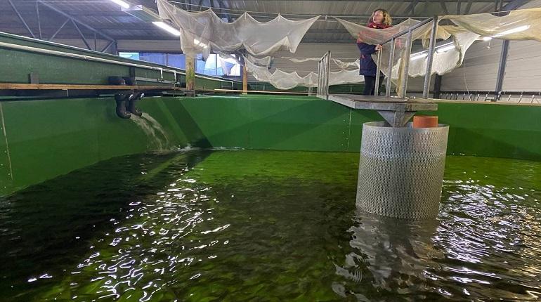Петербургские рыбаки смогут выловить 1,5 тысячи лососей из Невы