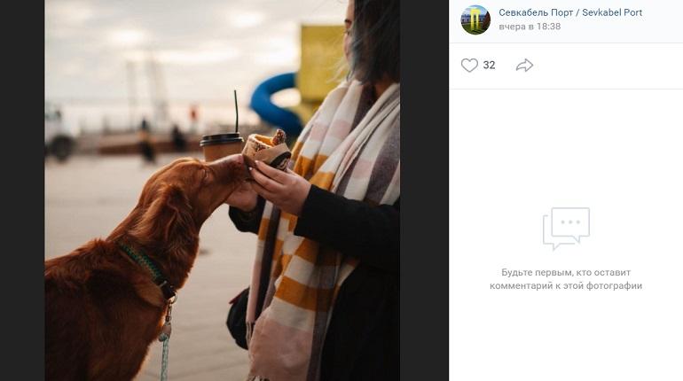 В «Севкабель Порту» теперь можно будет погулять с собакой