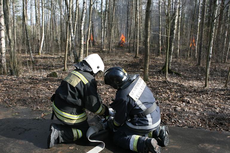 В России площадь лесных пожаров сократилась на 19 тыс. га