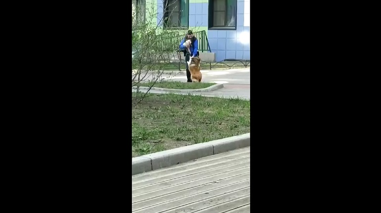 В ЖК О'Юность мужчина таскал на задних лапах и бил свою собаку