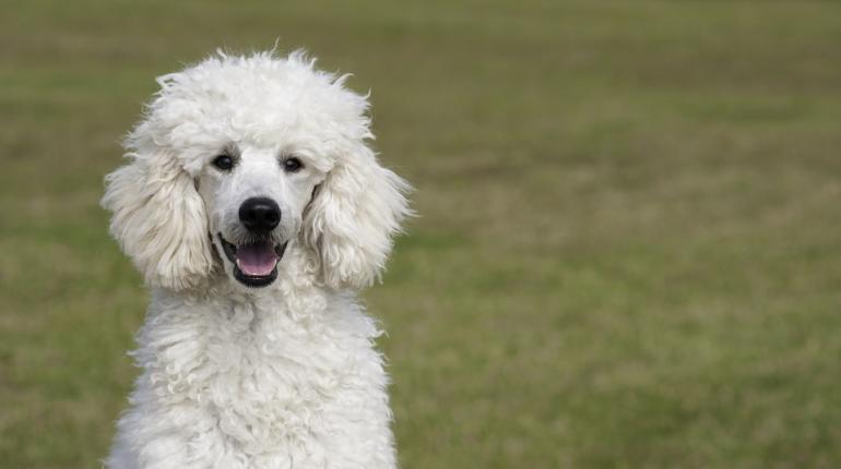 Финские ученые составили топ самых агрессивных пород собак