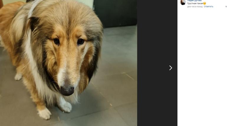 «Подавлены и травмированы»: стало известно состояние избитых петербуржцем собак