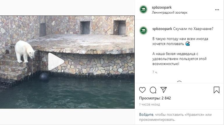 Ленинградский зоопарк показал, как медведица Хаарчана плавает и играет