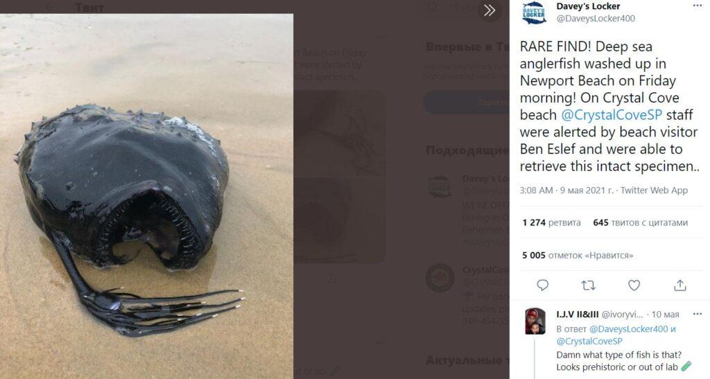 На побережье пляжа Калифорнии по непонятной причине выбросилась глубоководная рыба-удильщик