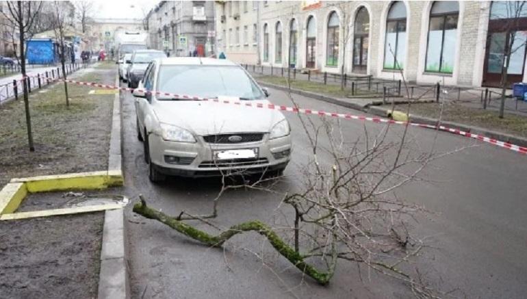 За три дня ураган повалил в Петербурге более 350 деревьев