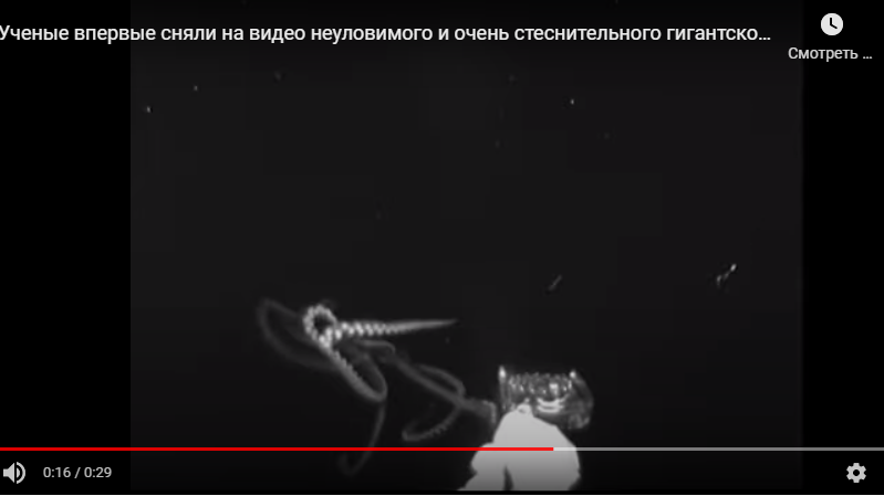 Ученые запечатлели редкий вид глубоководных 14-метровых кальмаров