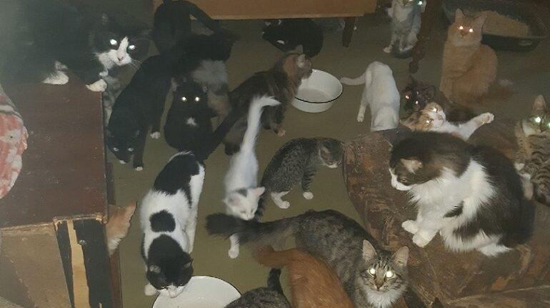 В квартире на Стрельнинском шоссе обнаружили кошачий притон