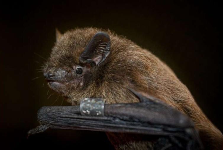 Ученые выяснили, как летучие мыши ощущают направление